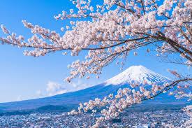 桜、4月、富士山